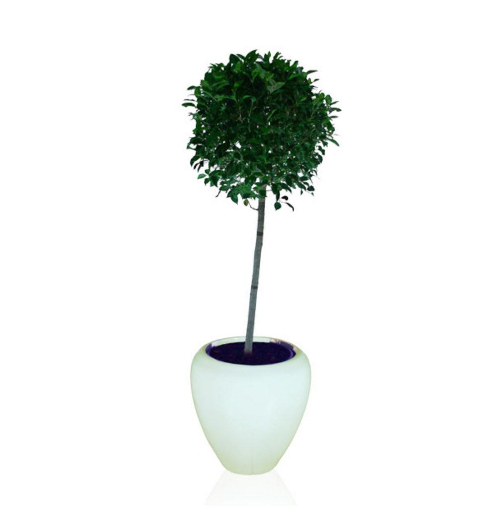 Topiary - 1.6m